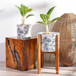 Lengkapi hiasan rumah anda dengan #planters dari #inahomeandliving 🍀 🌏 klik link di Bio atau ketuk DM untuk details Berbagi inspirasi biar kamu makin #betahdirumah #ceramicplanters #ceramic #homeaccessories #homefurniture #homedecor #homeliving